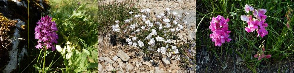 Planten uit de Gorges du Verdon
