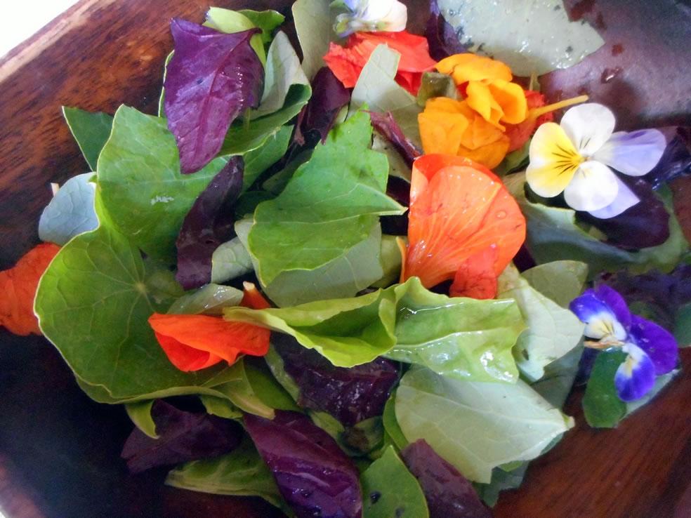 Salade met viooltjes, blad van rode melde en Oost-Indische kers