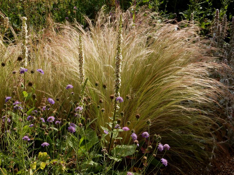 Planten voor droogte